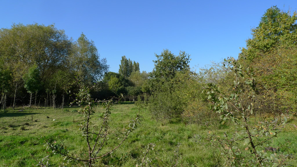 Image showing some land without planning permission